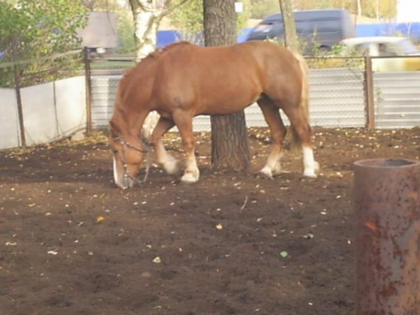 http://www.equestrian.ru/photos/user_photo/2008/a4960aaf.jpg