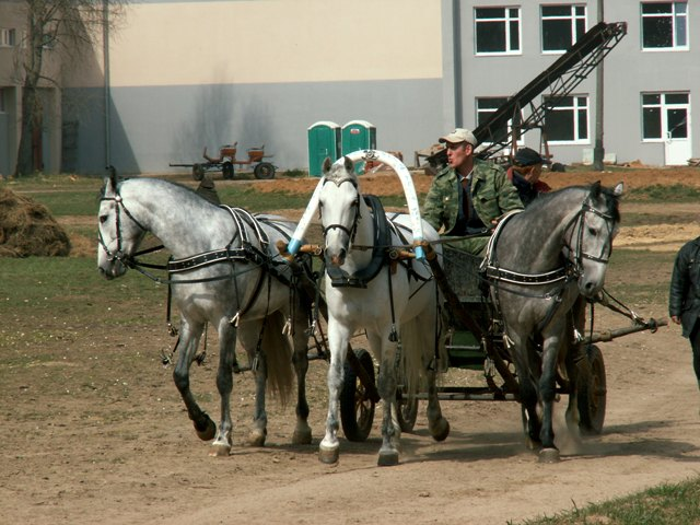 http://www.equestrian.ru/photos/user_photo/2008/a50dd92d.jpg