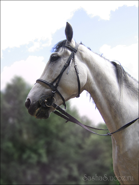 http://www.equestrian.ru/photos/user_photo/2008/a5af6788.jpg