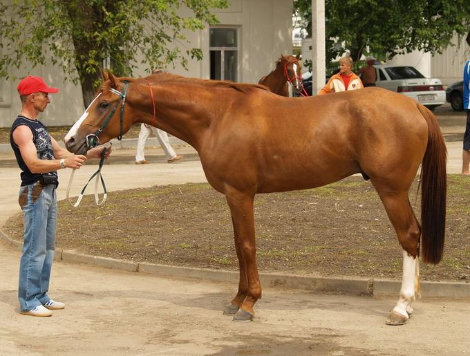 http://www.equestrian.ru/photos/user_photo/2008/ad991e6a.jpg