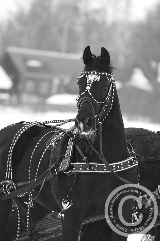 http://www.equestrian.ru/photos/user_photo/2008/b32aab6e.jpg
