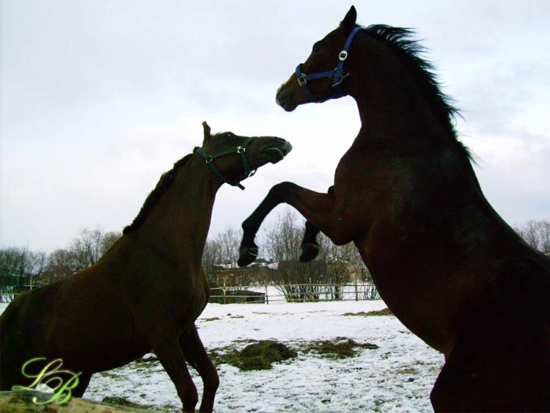 http://www.equestrian.ru/photos/user_photo/2008/b33e1d16.jpg
