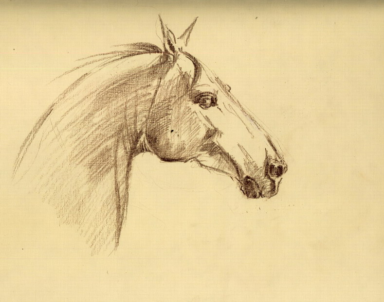 зарисовка - фотографии - Fefa Koroleva - конники.