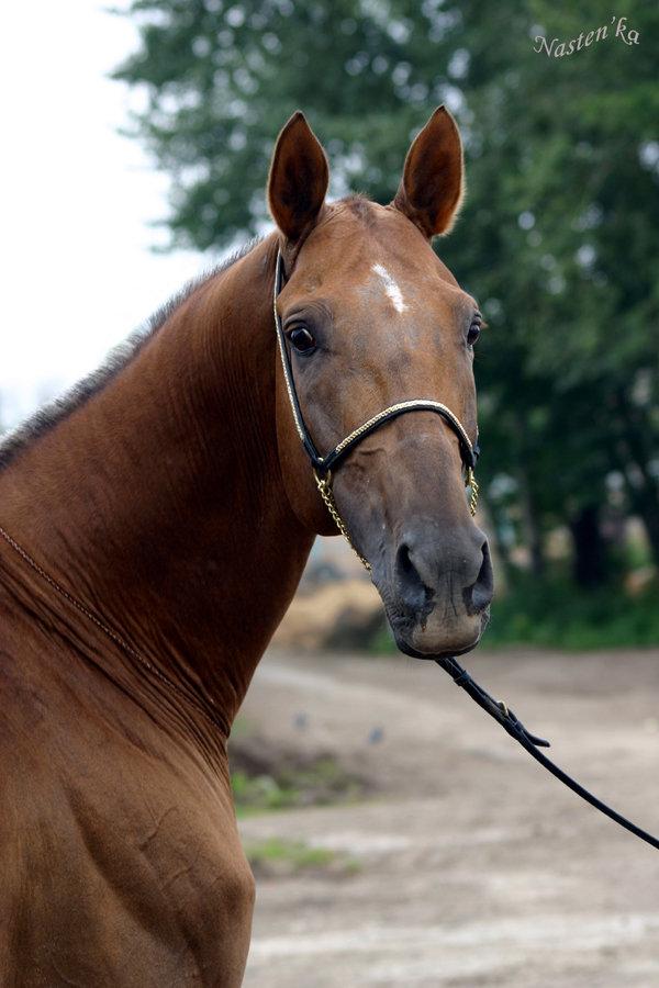 http://www.equestrian.ru/photos/user_photo/2008/b61c80a9.jpg