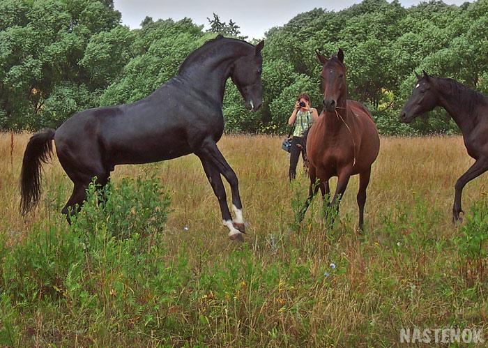 http://www.equestrian.ru/photos/user_photo/2008/b87f75bd.jpg