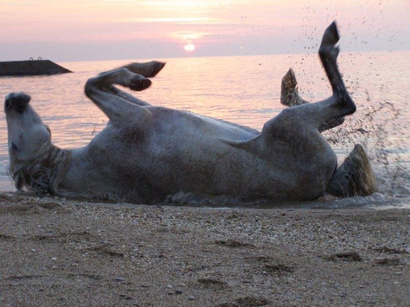 Пятница, от работы кони дохнут картинки прикольные с надписями