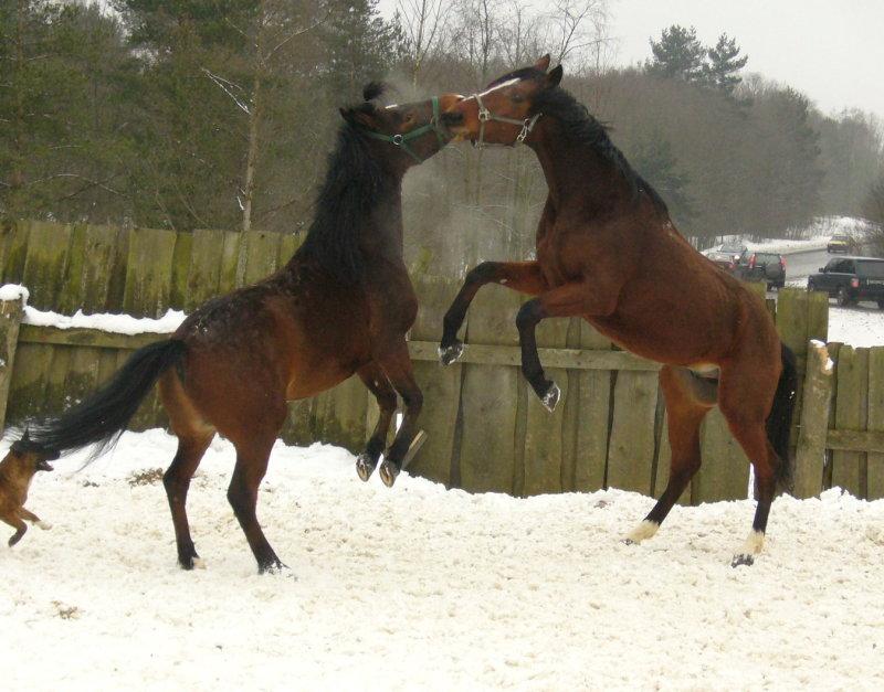 http://www.equestrian.ru/photos/user_photo/2008/be9d9b25.jpg