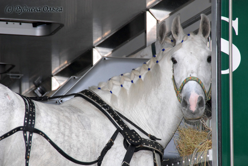 http://www.equestrian.ru/photos/user_photo/2008/c4c72886.jpg