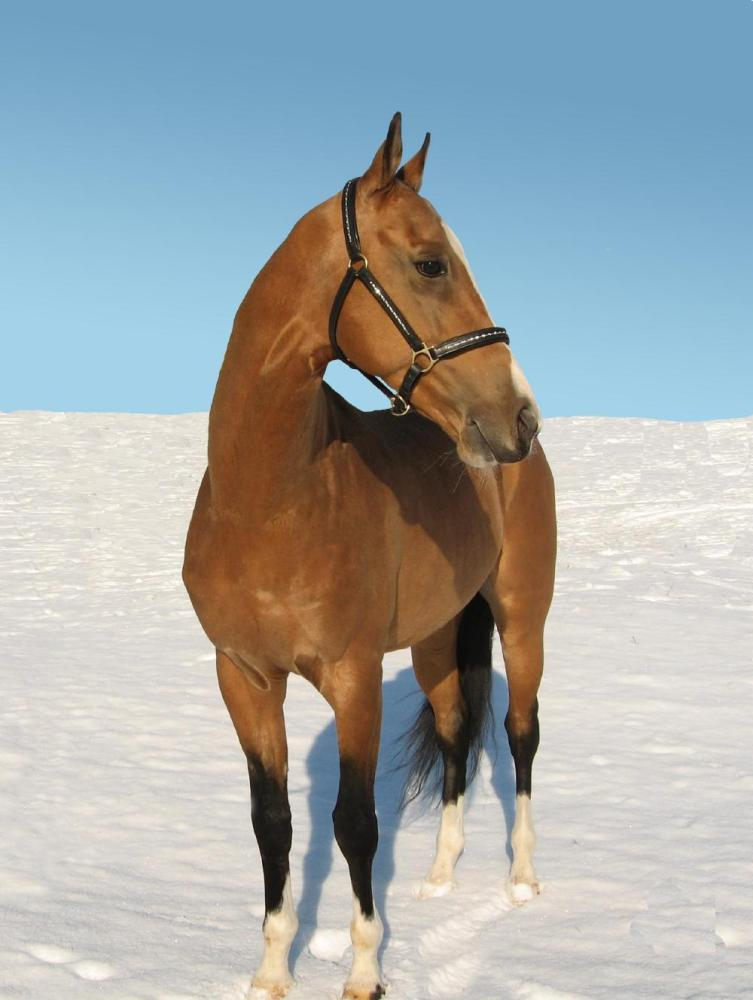 http://www.equestrian.ru/photos/user_photo/2008/c59a88ad.jpg