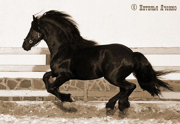 http://www.equestrian.ru/photos/user_photo/2008/cca77a23.jpg