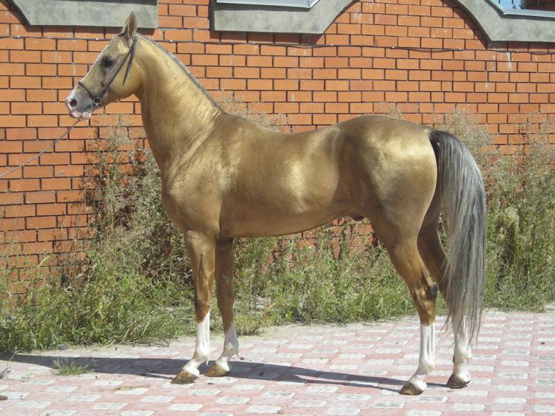 http://www.equestrian.ru/photos/user_photo/2008/d85029e2.jpg