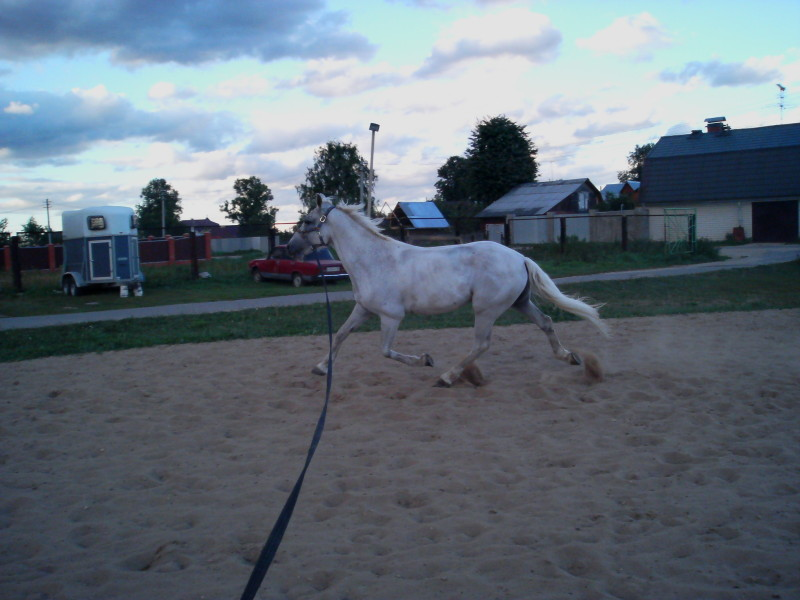 http://www.equestrian.ru/photos/user_photo/2008/dca4ba7e.jpg
