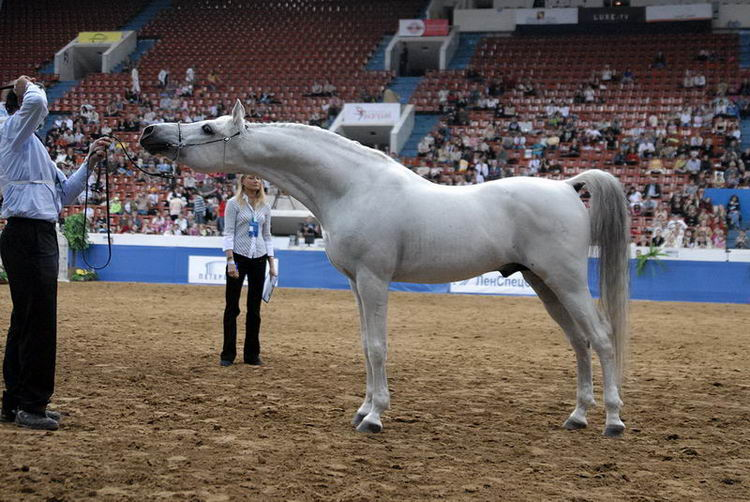 http://www.equestrian.ru/photos/user_photo/2008/e22628d8.jpg