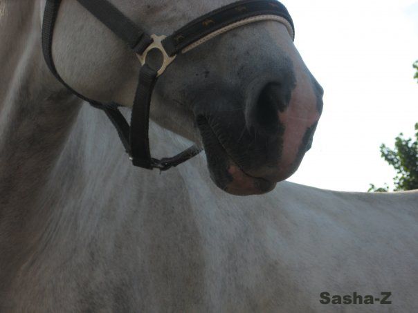 Pink nose of grey horse=)