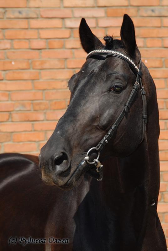 http://www.equestrian.ru/photos/user_photo/2008/e836b404.jpg