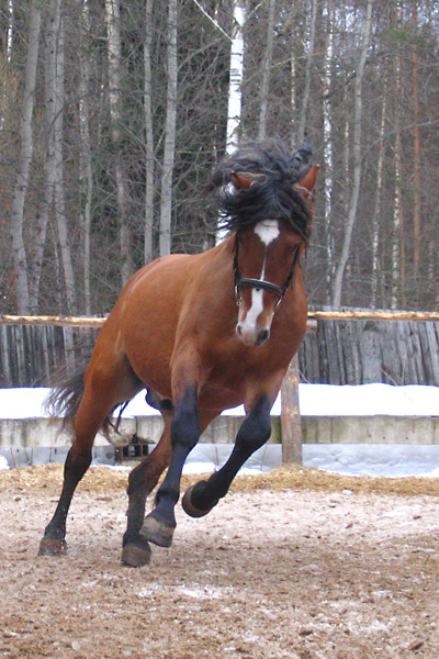 http://www.equestrian.ru/photos/user_photo/2008/ede0a159.jpg