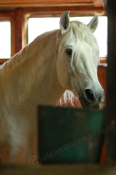 http://www.equestrian.ru/photos/user_photo/2008/f12937d7.jpg