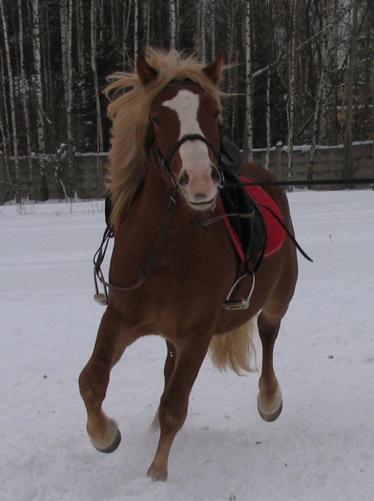 http://www.equestrian.ru/photos/user_photo/2008/f19bddb2.jpg