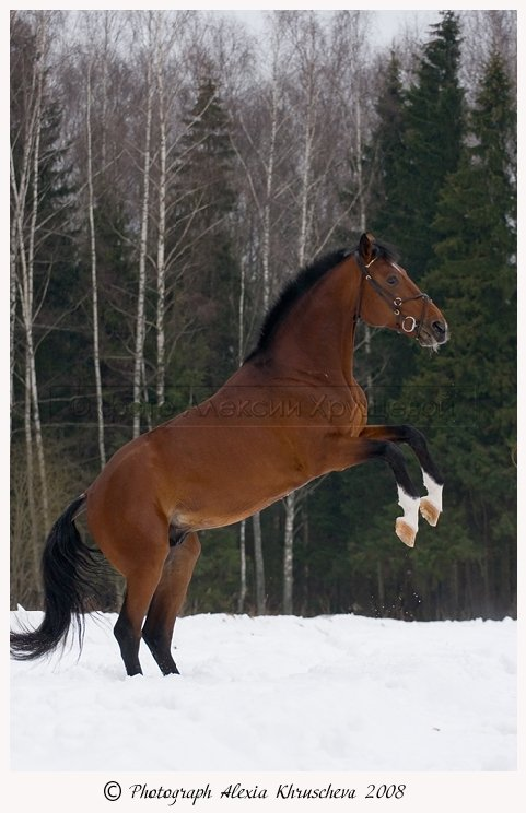 http://www.equestrian.ru/photos/user_photo/2008/f5e1ca99.jpg