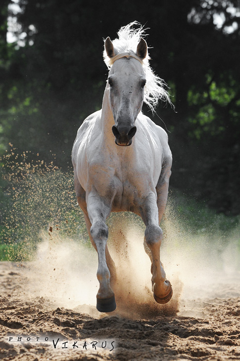 http://www.equestrian.ru/photos/user_photo/2008/fc782b41.jpg