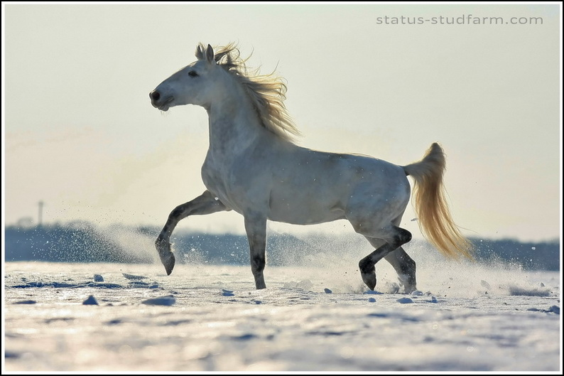 http://www.equestrian.ru/photos/user_photo/2009/1d080883.jpg