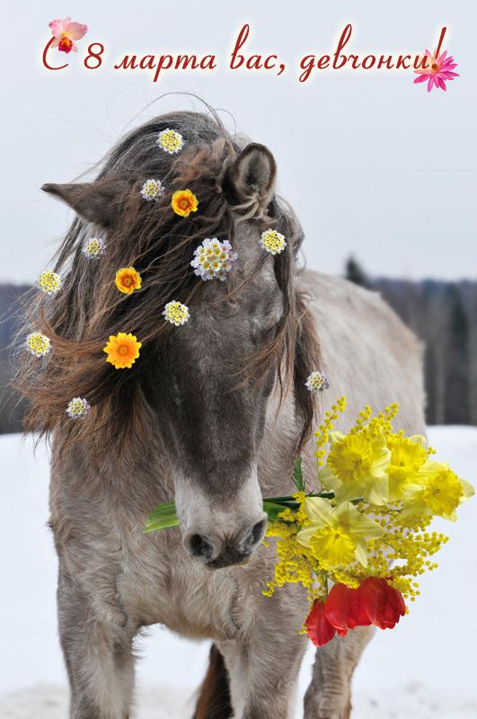 Открытка с лошадью на 8 марта