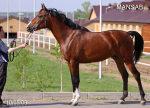 http horse lc ucoz ru - Cхемы и описания на каждый день.