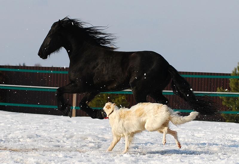 красивая растительность, картинки борзая лошадь снимке