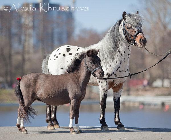Две миниатюрные лошадки