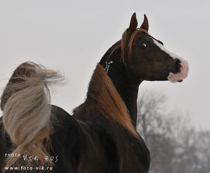 http://www.equestrian.ru/photos/user_photo/2009/991b4ac1.jpg