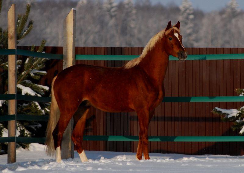 Paroda : Proporcingiausias žirgas. REGISTRACIJA B37c8f85