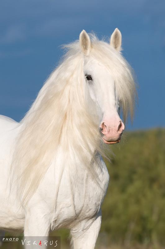 http://www.equestrian.ru/photos/user_photo/2010/384a5727.jpg