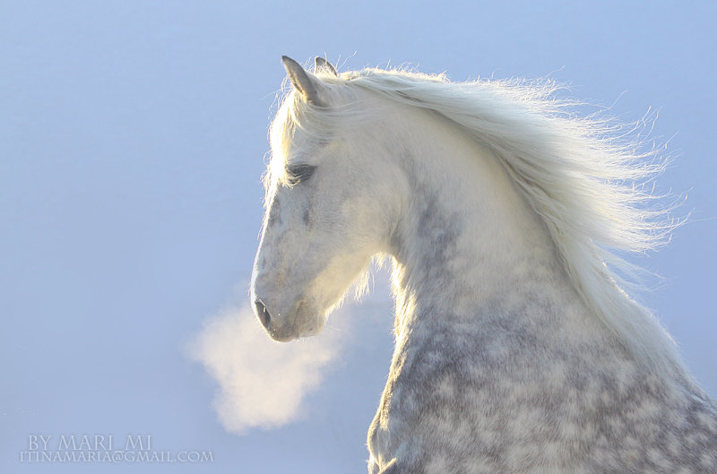 http://www.equestrian.ru/photos/user_photo/2010/95197ee7.jpg