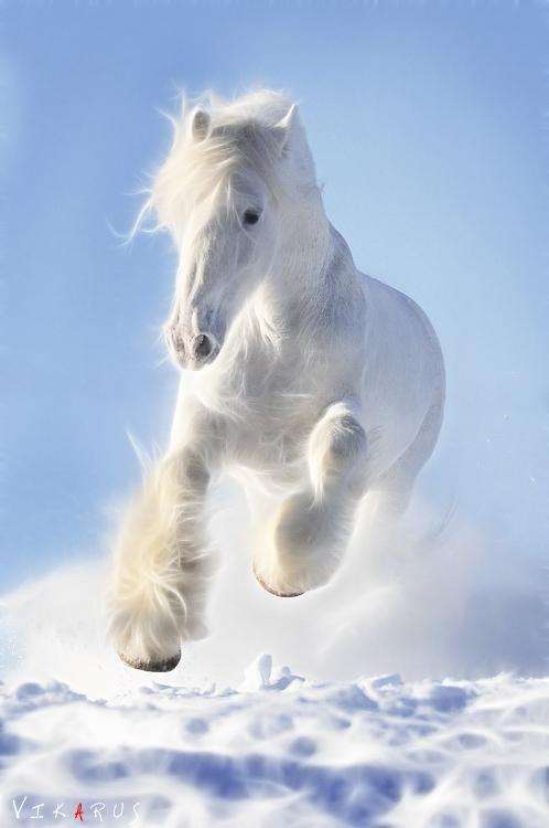 http://www.equestrian.ru/photos/user_photo/2010/c7d81a80.jpg