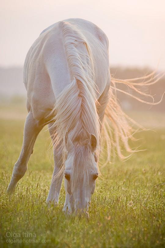 Белая лошадь горе не мое скачать книгу