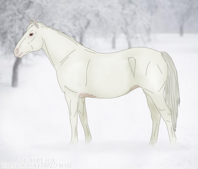 White Thoroughbred Mare