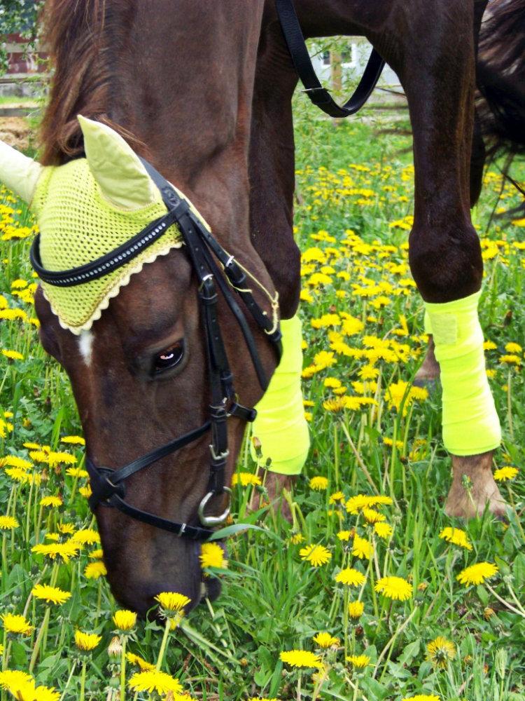 Как сделать ушки на лошадь своими руками