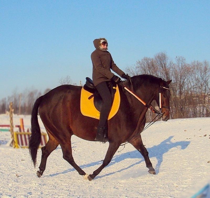 поздравление в конном спорте прожил