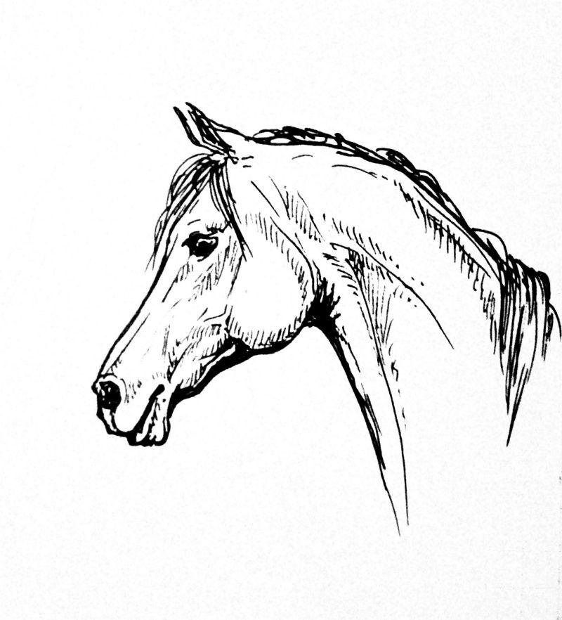 Фото и рисунки головы лошади