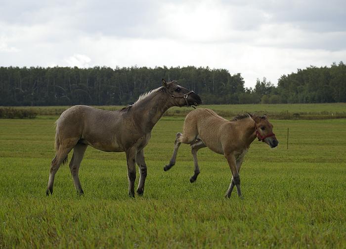http://www.equestrian.ru/photos/user_photo/2011/9c5f1a9b.jpg