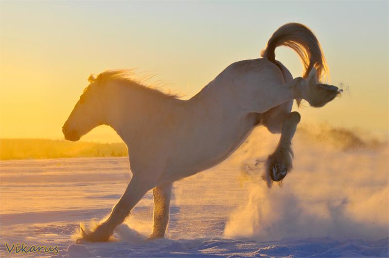http://www.equestrian.ru/photos/user_photo/2011/cfa533e5.jpg