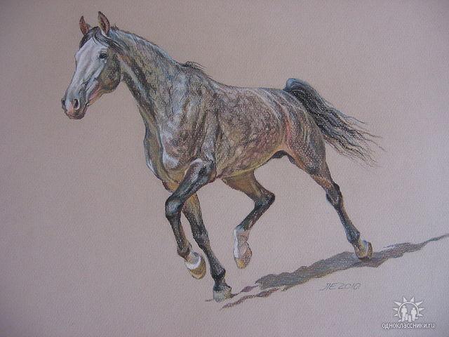 Фото лошадей как их рисовать