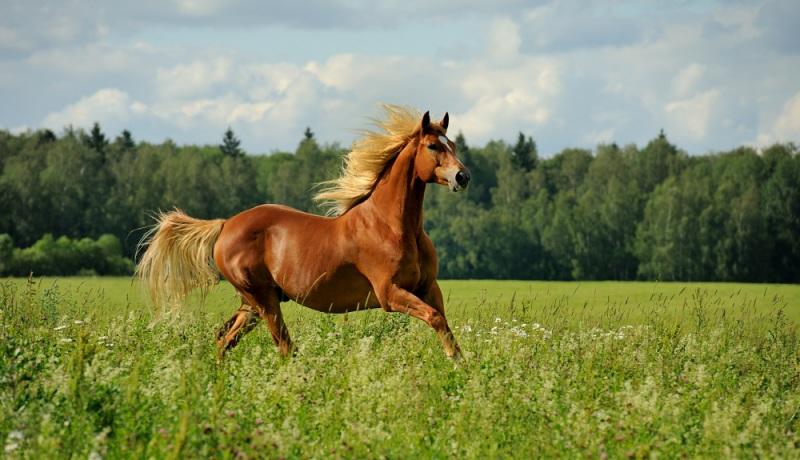 Дж конь скачать песни