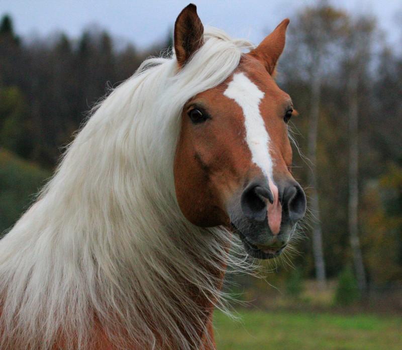Лошади фото красивые картинки с надписями какая порода, смешные