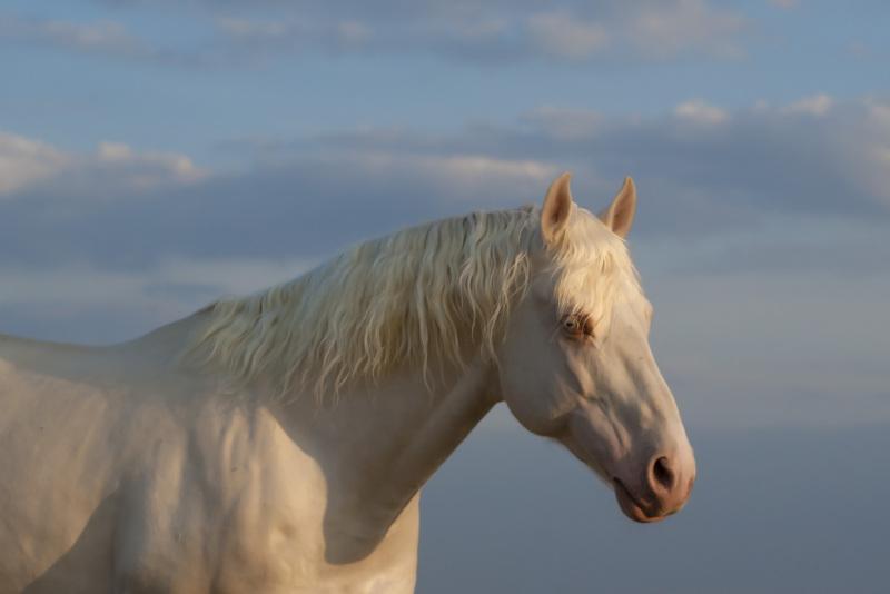 http://www.equestrian.ru/photos/user_photo/2012/502b801a.jpg