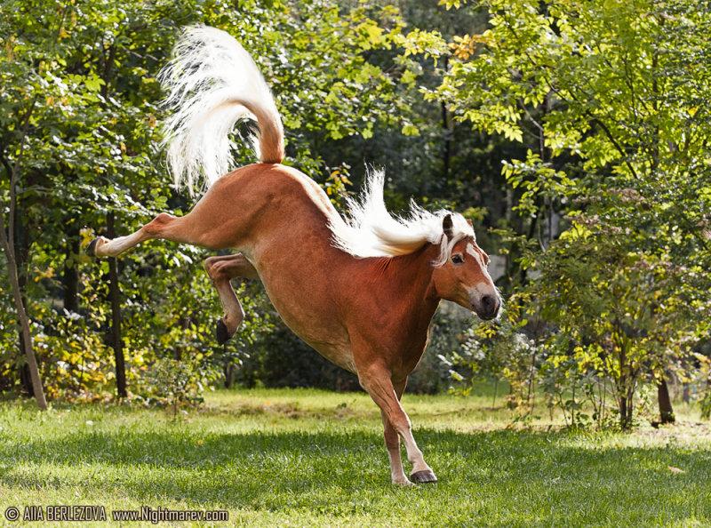 Фото лошади свело-игреневой масти