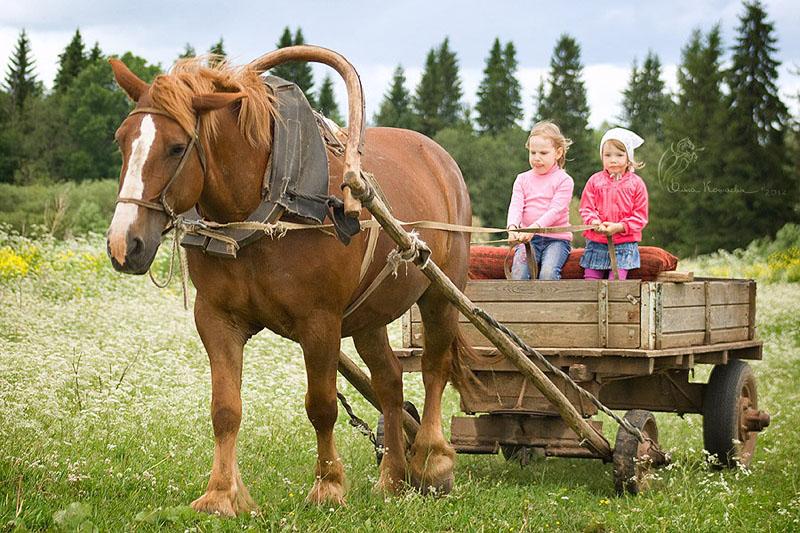 Повозки для лошадей