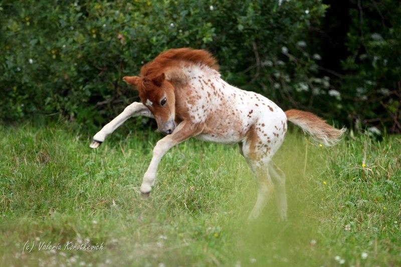 https://www.equestrian.ru/photos/user_photo/2012/9f4cc34a.jpg