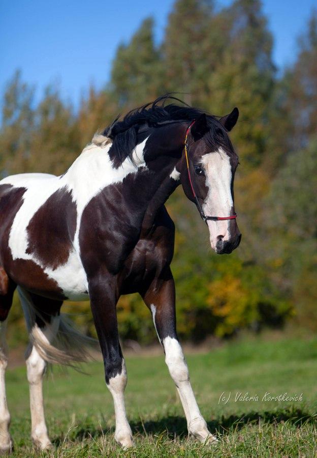 https://www.equestrian.ru/photos/user_photo/2012/9fef9e88.jpg