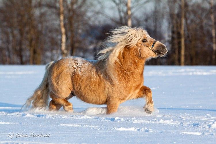 Funny ponies mlp gallery